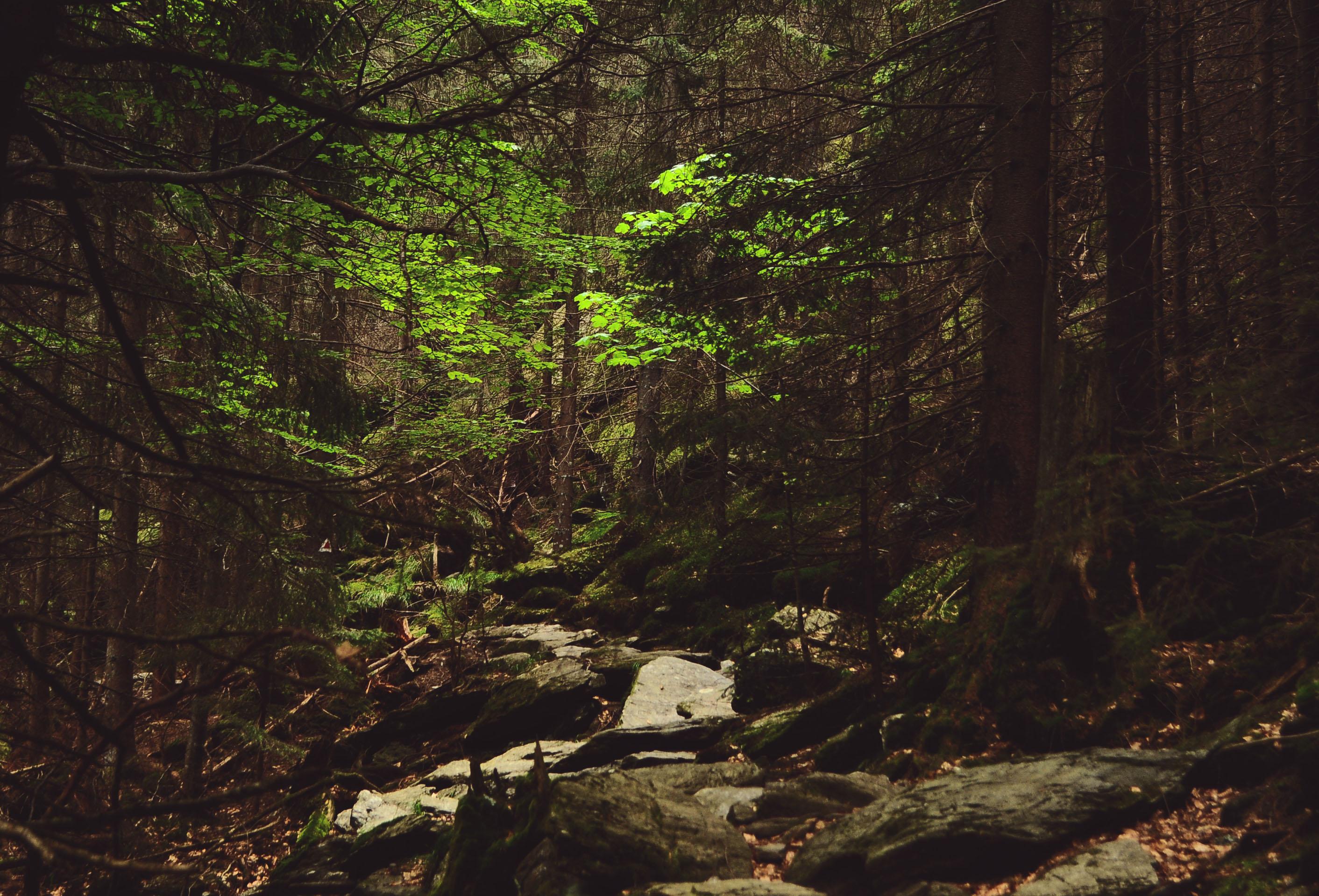faragas-forest