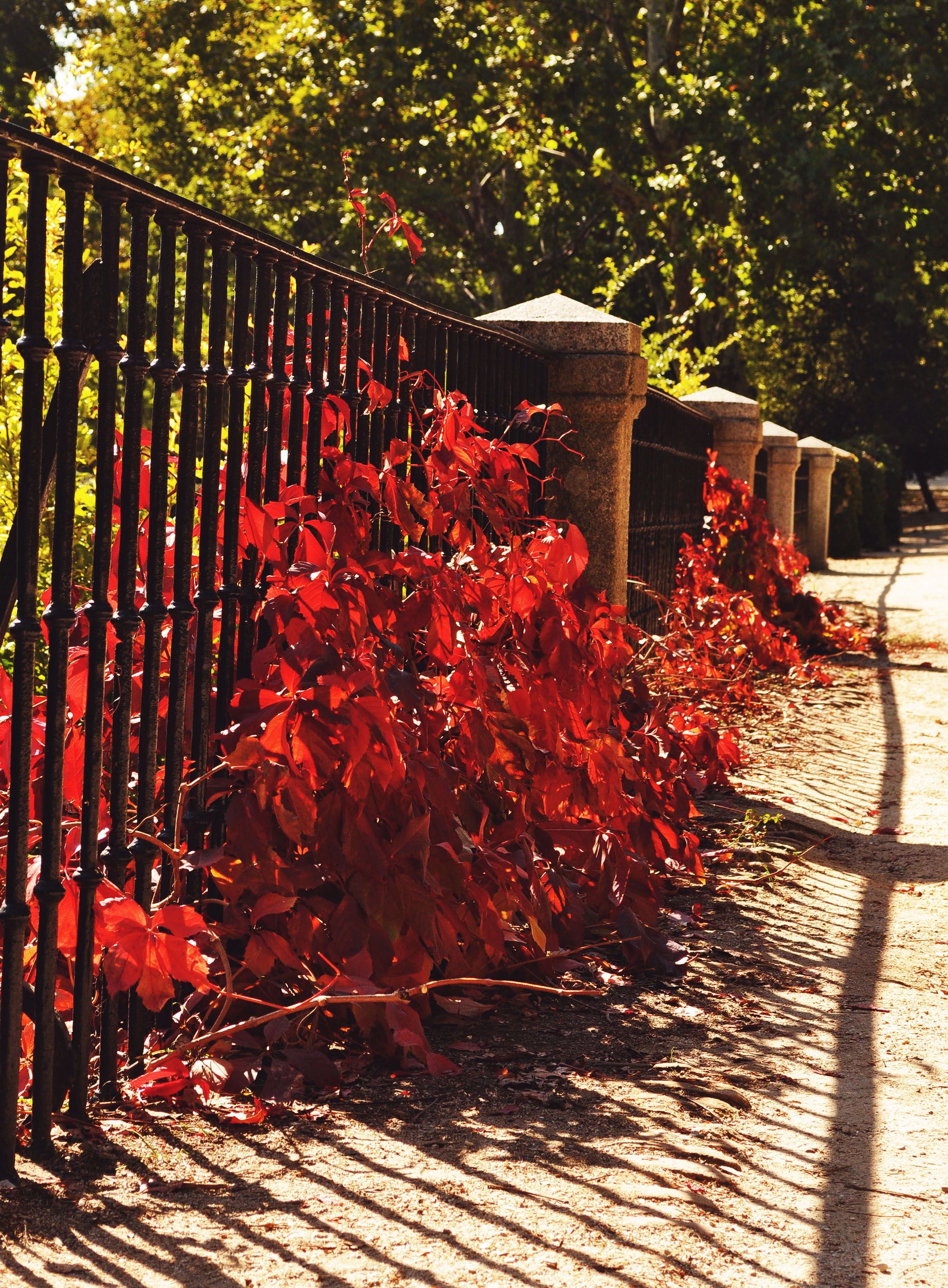madrid-capricho-park-red-ivy