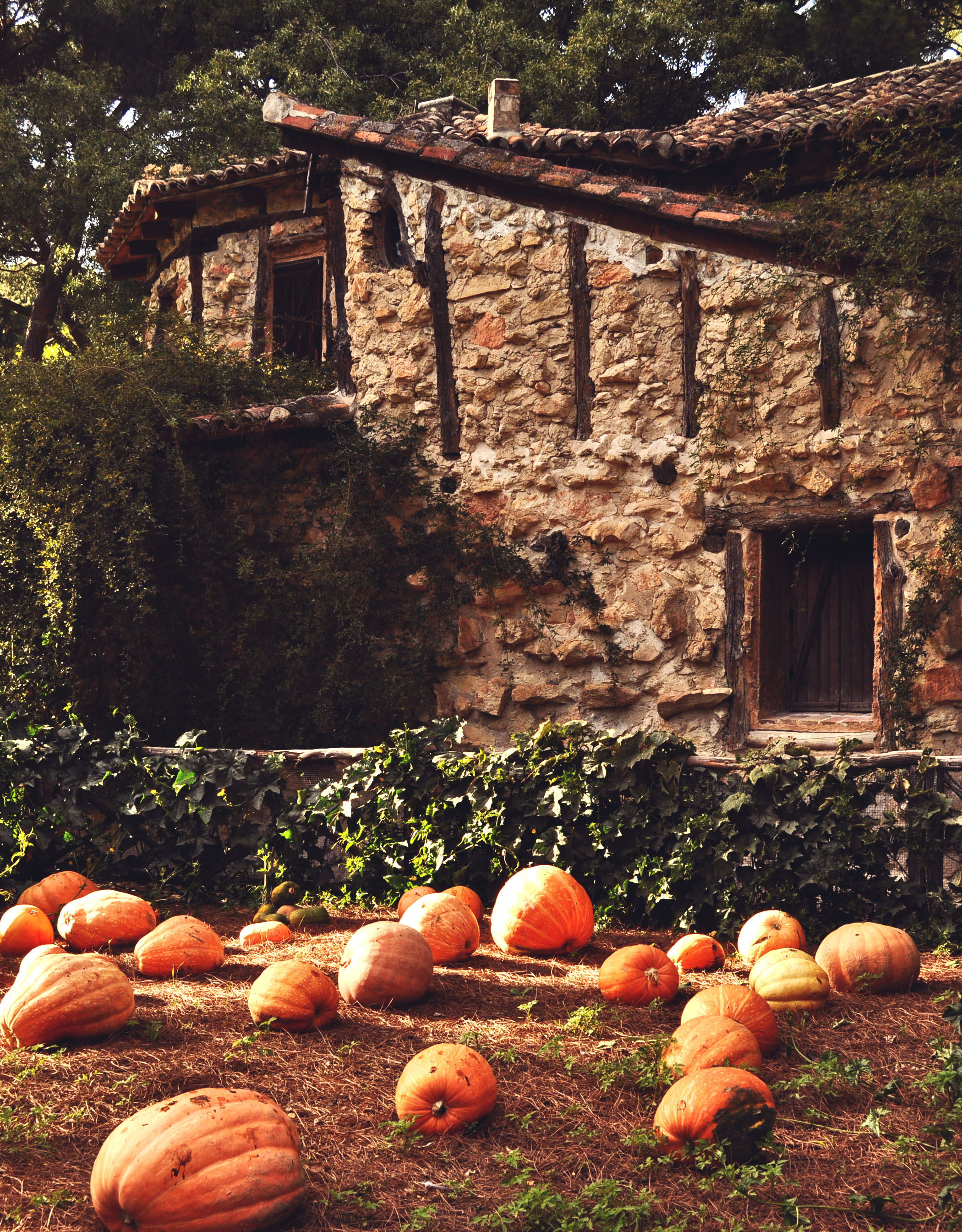 madrid-the-pumpkin-house
