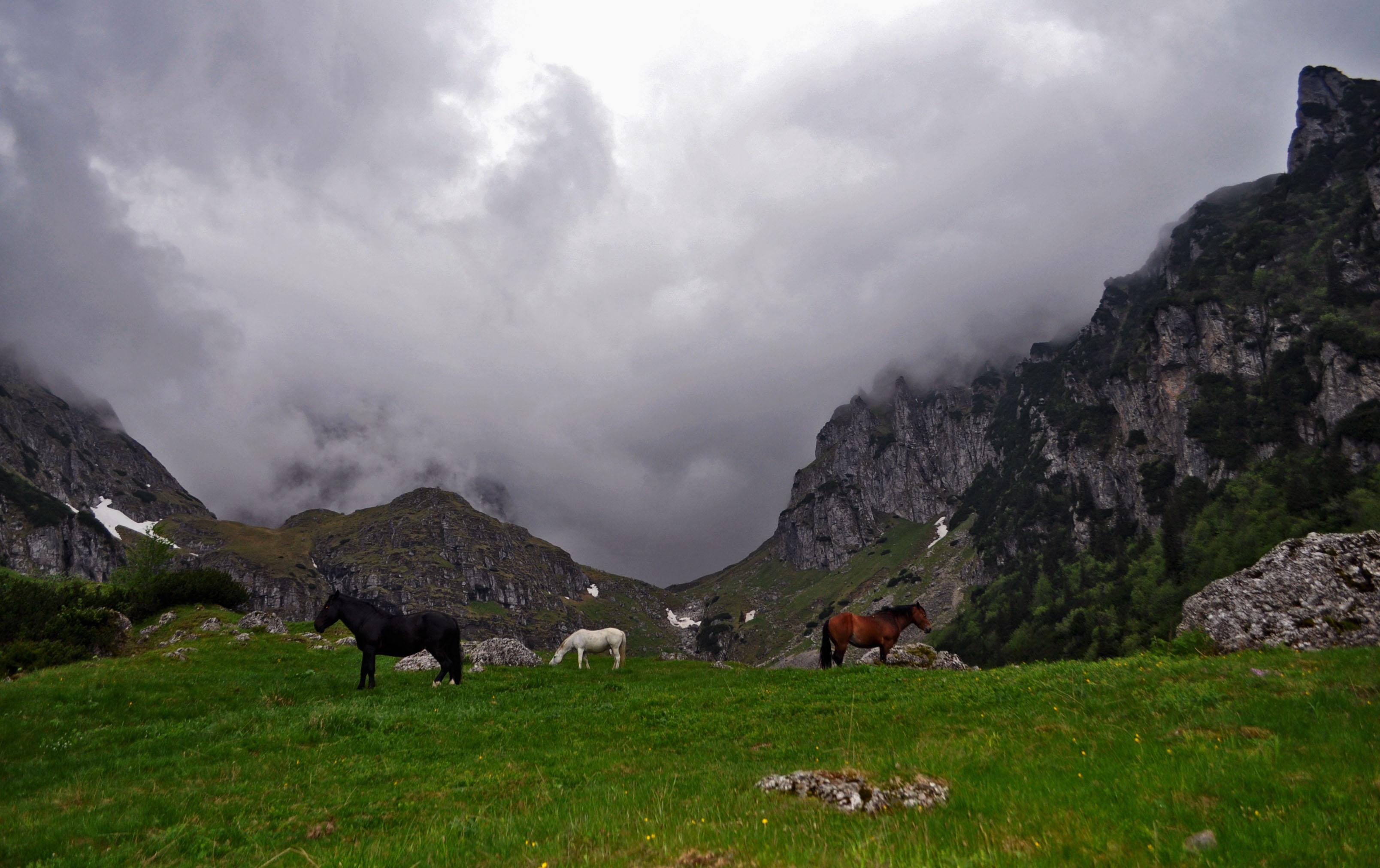 malaiesti_horses