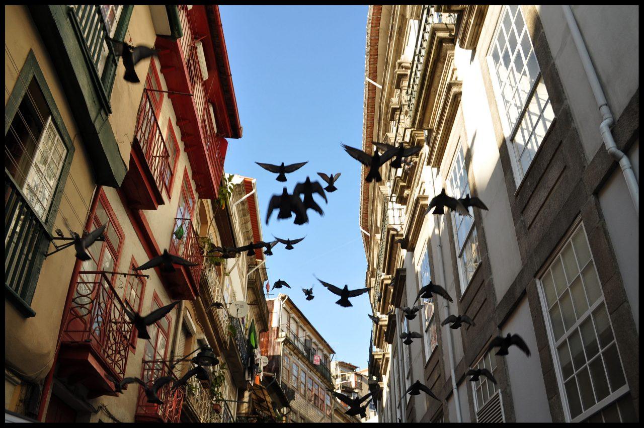 porto_birds-flying-high