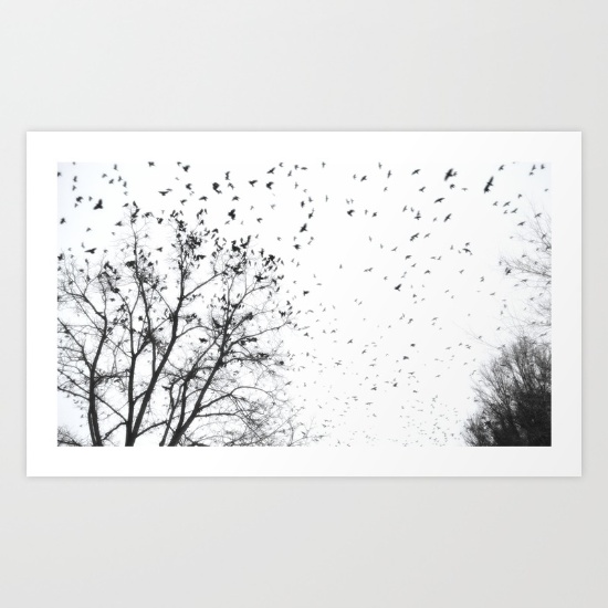 crows-crows-crows-by-ra-luca