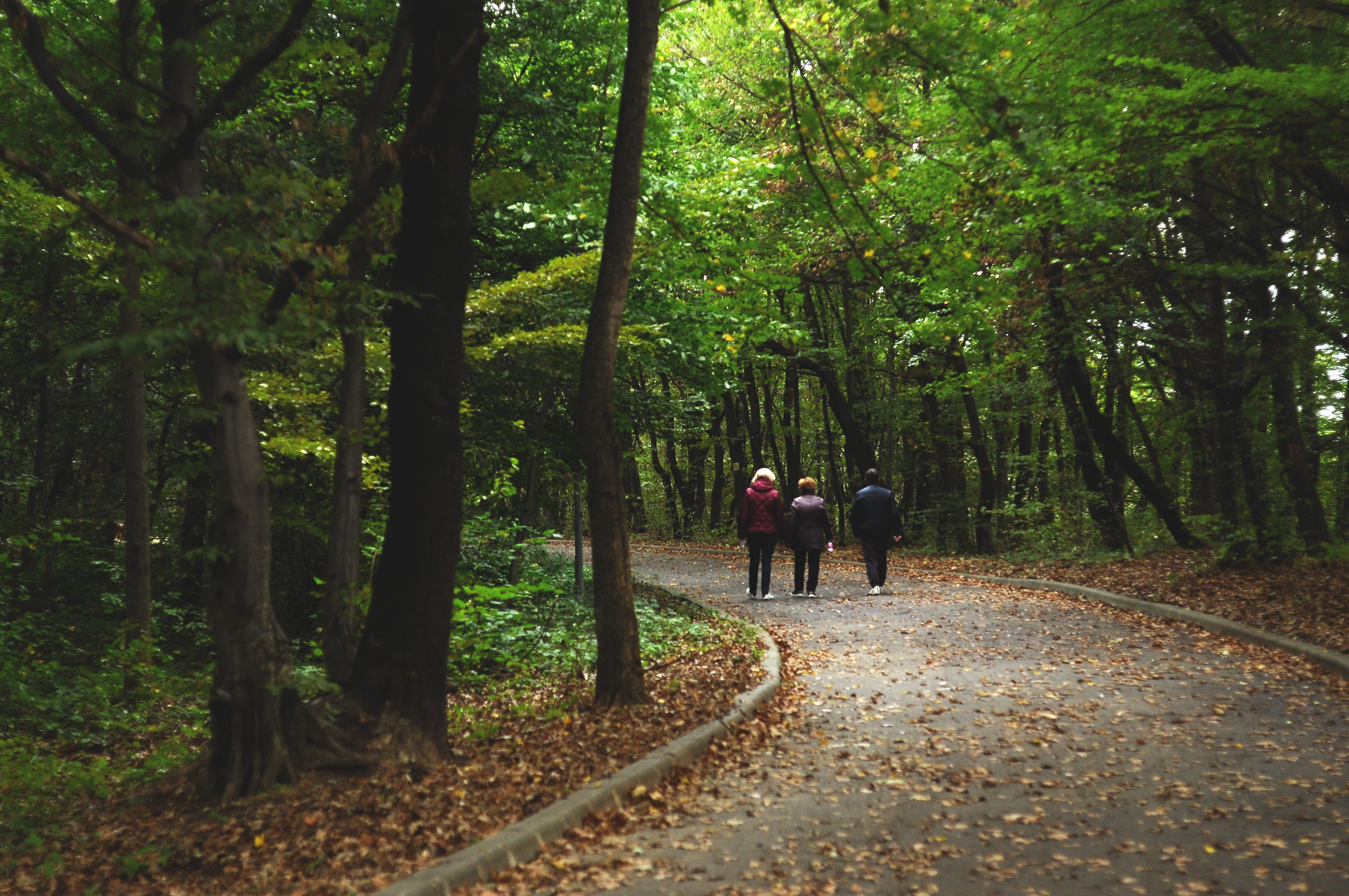 Plimbare in Bradrt-min