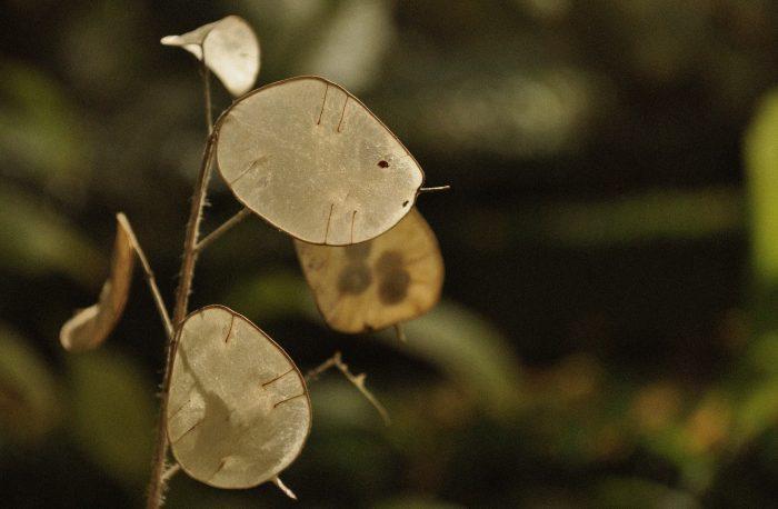 nature-close-ups